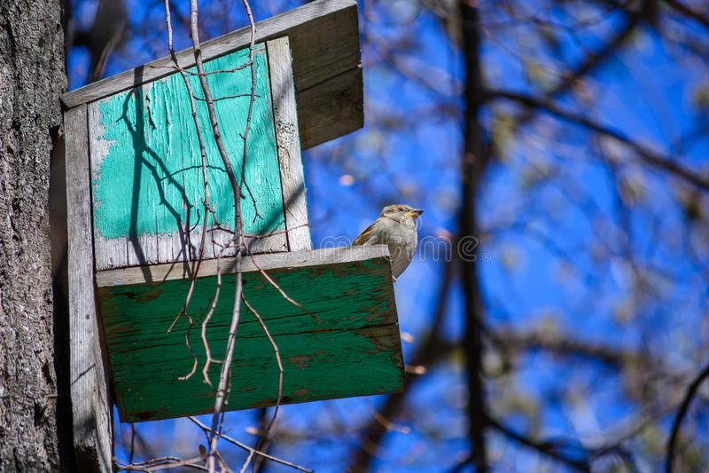 Wróbli obsiadanie na drzewie w żłobie fotografia stock