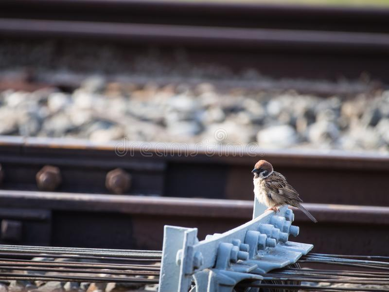 Wróblia pozycja na wyposażeniu, Szlakowy Przełącznikowy pociąg zdjęcia stock