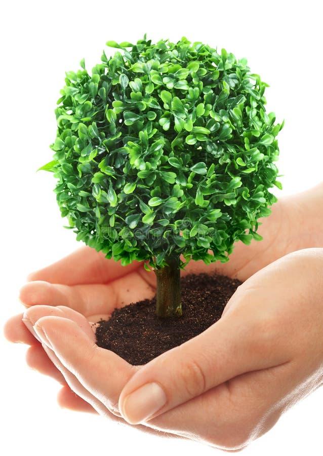 wręcza ludzkiego drzewa zdjęcie royalty free