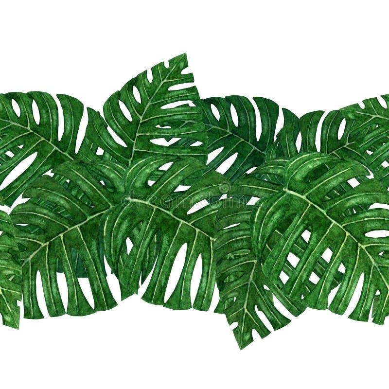 Wręcza malującej akwareli tropikalnego monstera liść bezszwowy wzór ilustracji