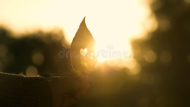 Wręcza mienie jesieni liść z sercem wśrodku, piękny złoty sezon jesienny, miłość zdjęcia royalty free