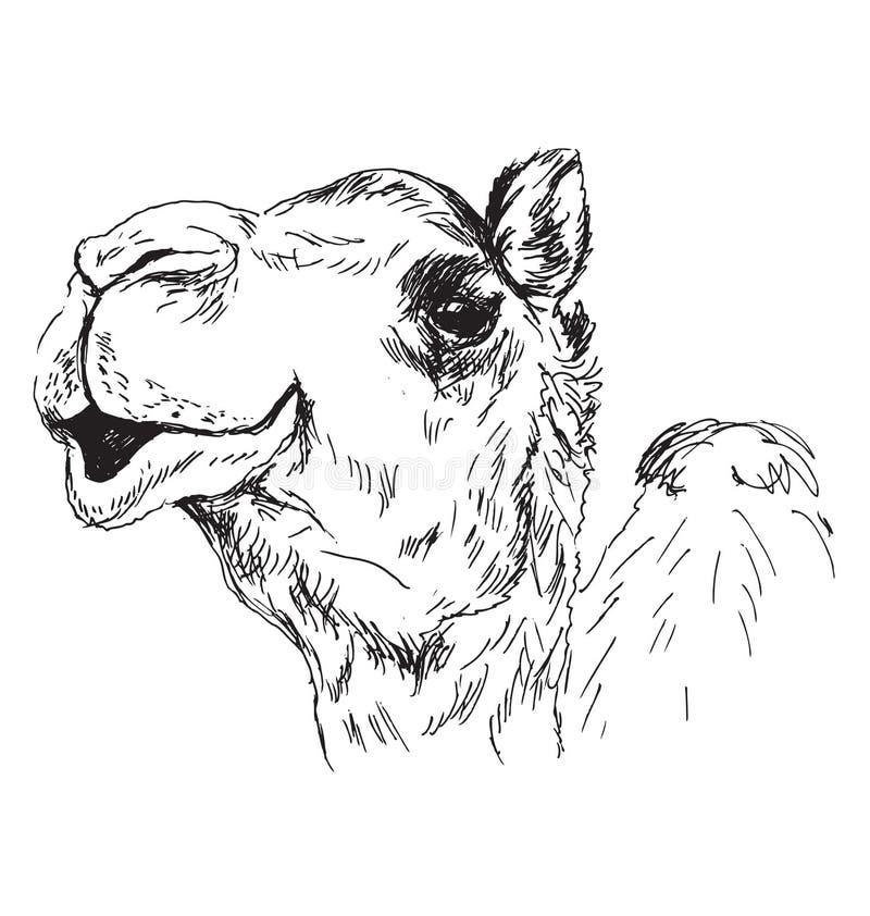 Wręcza nakreślenie głowa wielbłąd ilustracja wektor