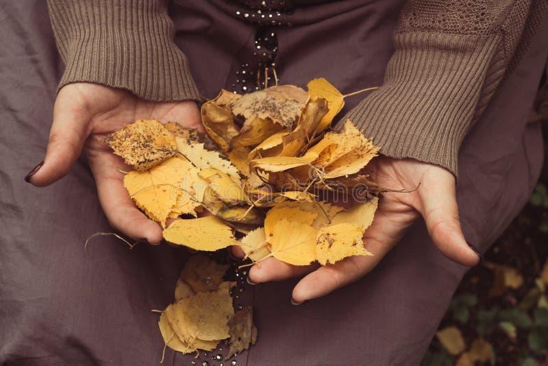 Wręcza odgórnego widok z żółtymi jesień liśćmi obraz stock