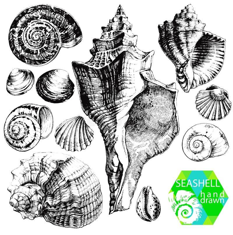 Seashells ilustracji