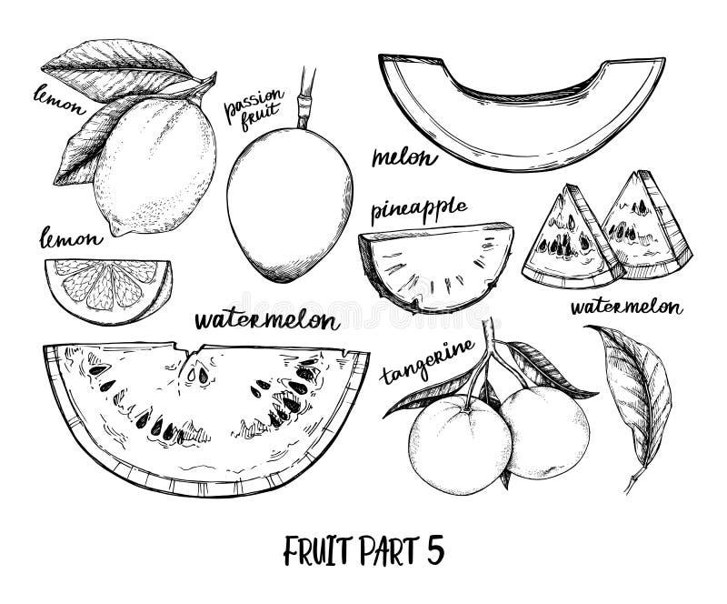 Wr?cza patroszon? wektorow? ilustracj? - kolekcja tropikalne i egzotyczne owoc Zdrowi karmowi elementy Bonkreta, arbuz, ananas, royalty ilustracja