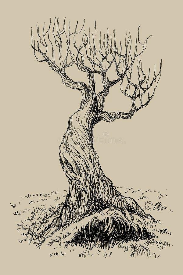 Wręcza patroszoną wektorową ilustrację stary mistyczny drzewo Odosobniona ilustracja grawerujący styl styl retro ilustracja wektor