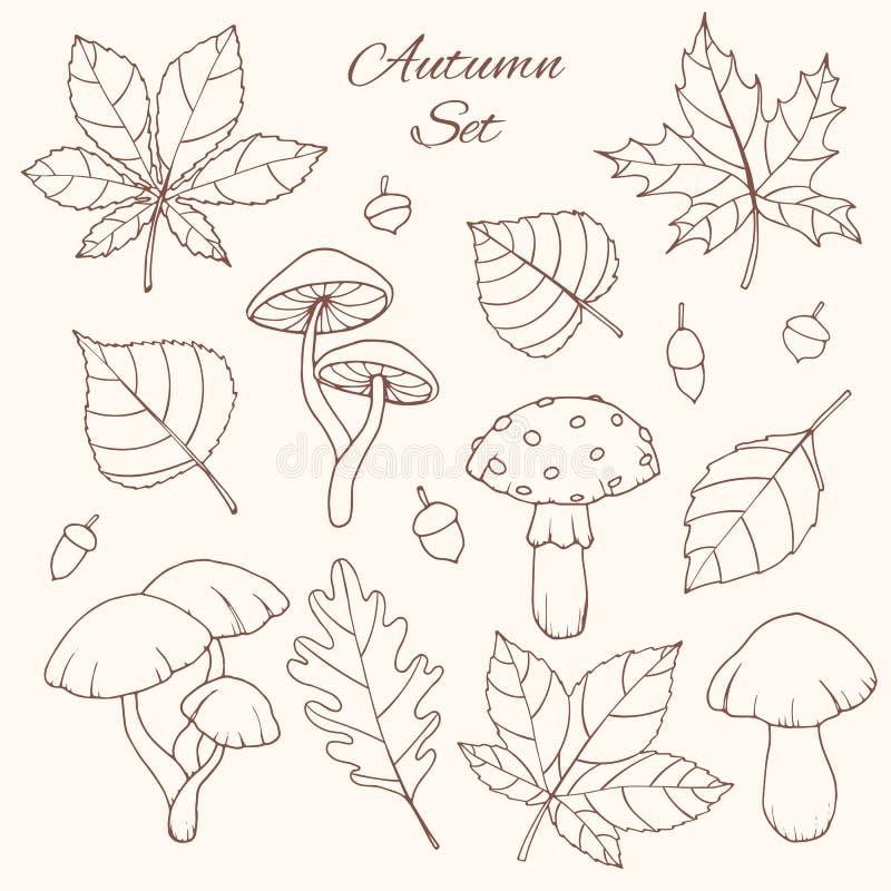 Wręcza patroszoną wektorową jesień ustawiającą z dębem, topola, buk, klon, osika i koński kasztan opuszcza, acorns i pieczarek kr ilustracji