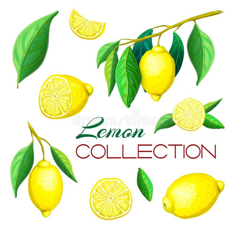 Wręcza patroszone świeże cytryn owoc odizolowywać na bielu Set różne cytryny na gałąź, z liśćmi, całymi, cięcie w połówce zdjęcia royalty free