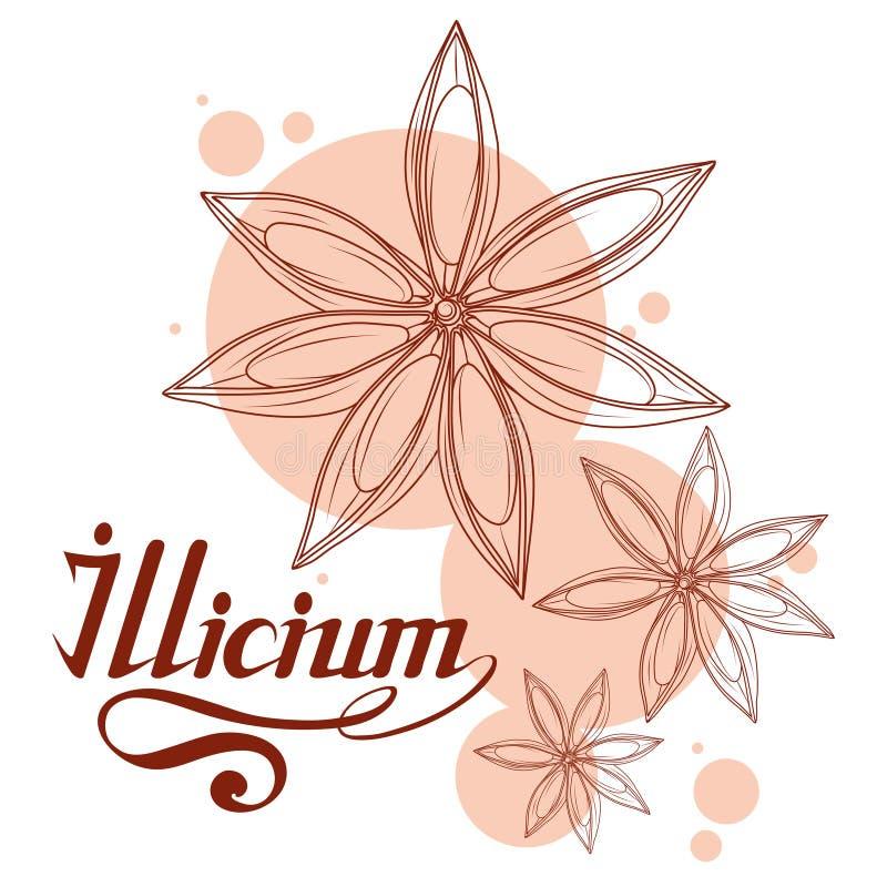 Wręcza patroszonego gwiazdowego anyż, korzenny składnik, gwiazdowego anyżu logo, zdrowa żywność organiczna, pikantność gwiazdowy  royalty ilustracja