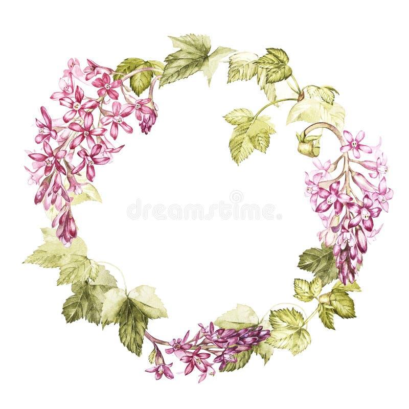Wręcza patroszonej akwareli botaniczną ilustrację kwiaty czarny rodzynek Element dla projekta zaproszenia, film ilustracja wektor