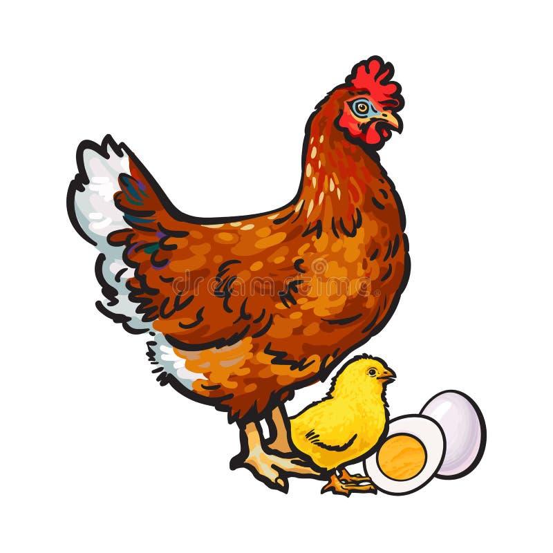 Wręcza patroszonej brown karmazynki, małego kurczaka i jajka, strugającego, gotowanego, ilustracji