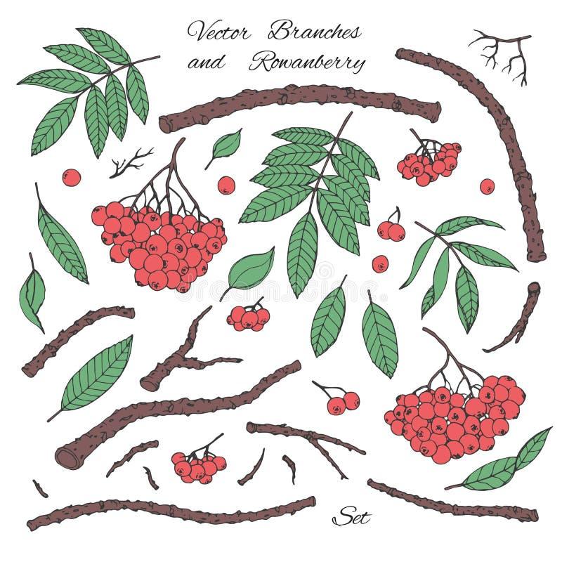 Wręcza patroszony wektorowego ustawiającego gałąź, liście i czerwonego rowanberry kreskowa sztuka odizolowywająca na białym tle, ilustracji