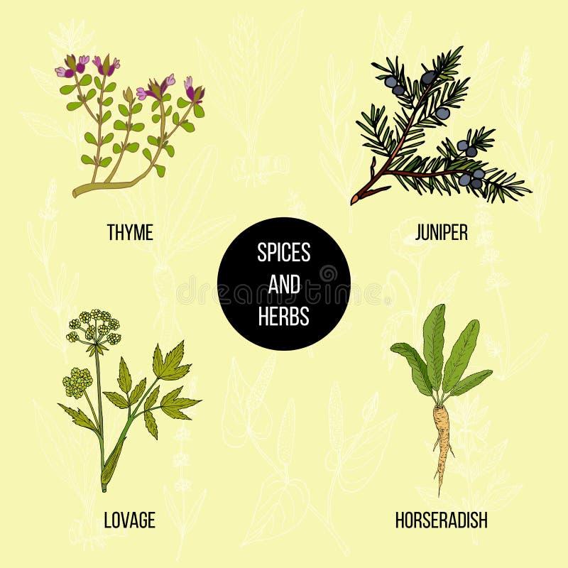 Wręcza rysującego set kulinarni ziele i pikantność ilustracja wektor