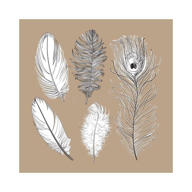 Wręcza rysującego set różnorodni czarny i biały ptasi piórka, wektorowa ilustracja royalty ilustracja
