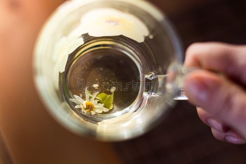 Wręcza trzymać przejrzystego kubek chamomile herbata Pożytecznie kasłanie i zimny remedium fotografia stock