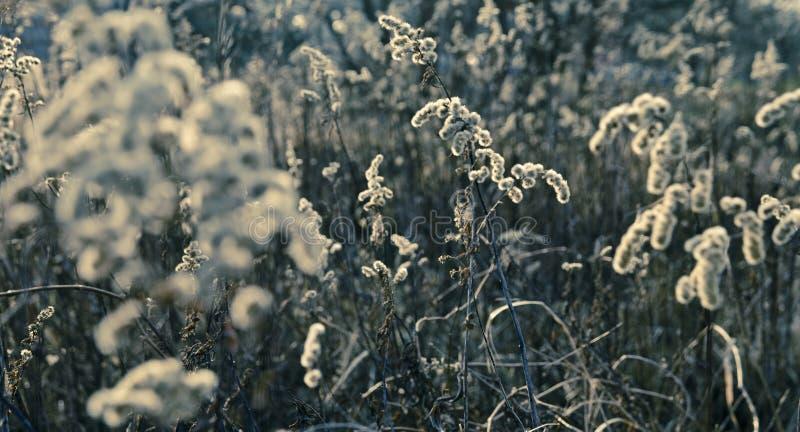 wrażenie łąka fotografia royalty free