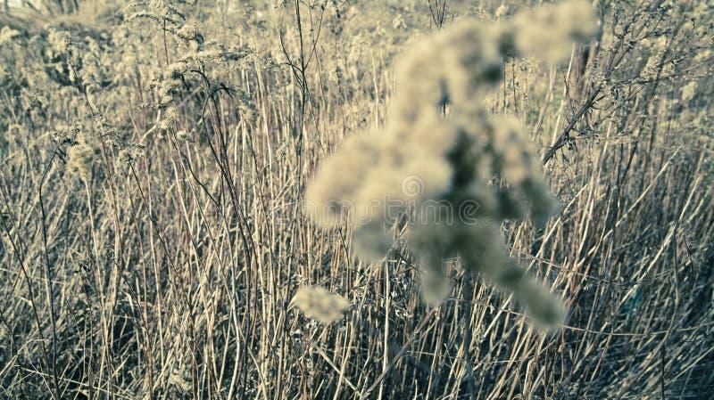 wrażenie łąka zdjęcie stock