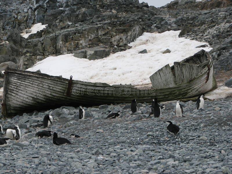 Wrak i pingwiny na plażowym Antarctica zdjęcia royalty free