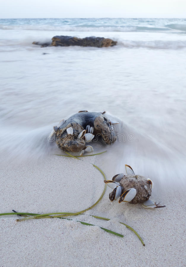 Wrakstukken en jetsam - drijfhout op het strand in golfbreker stock foto's