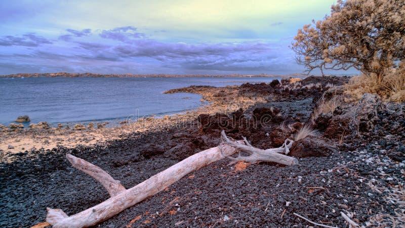 Wrakstukken op Rangitoto-strand met Hauraki-golf op de achtergrond royalty-vrije stock foto's