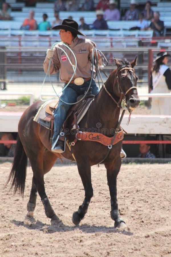 Wrangler - Cheyenne dni Nadgraniczny rodeo 2013 obrazy royalty free