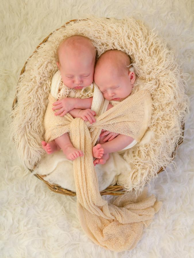 Wrapped identical twins. Adorable newborn identical twin baby girls sleeping in a soft basket stock photography