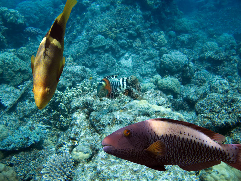 Download Wrassereef Royalty Free Stock Images - Image: 9411159