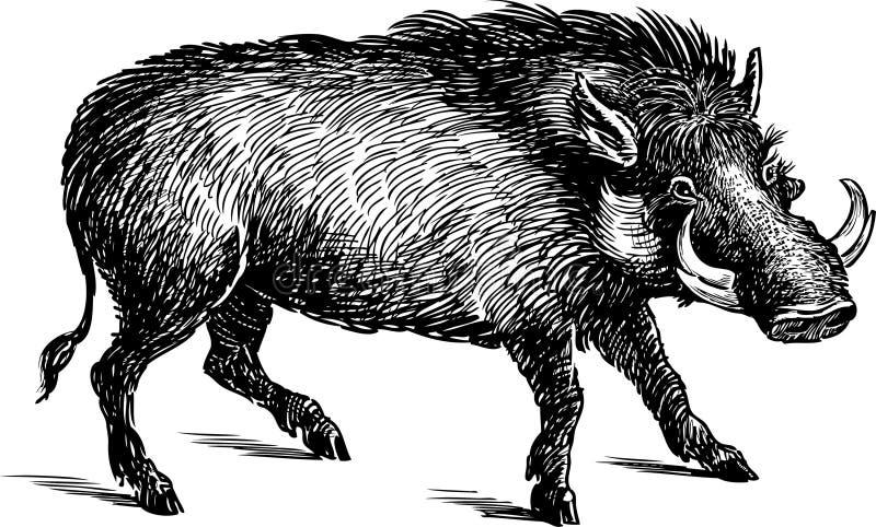 Wrattenzwijn stock illustratie