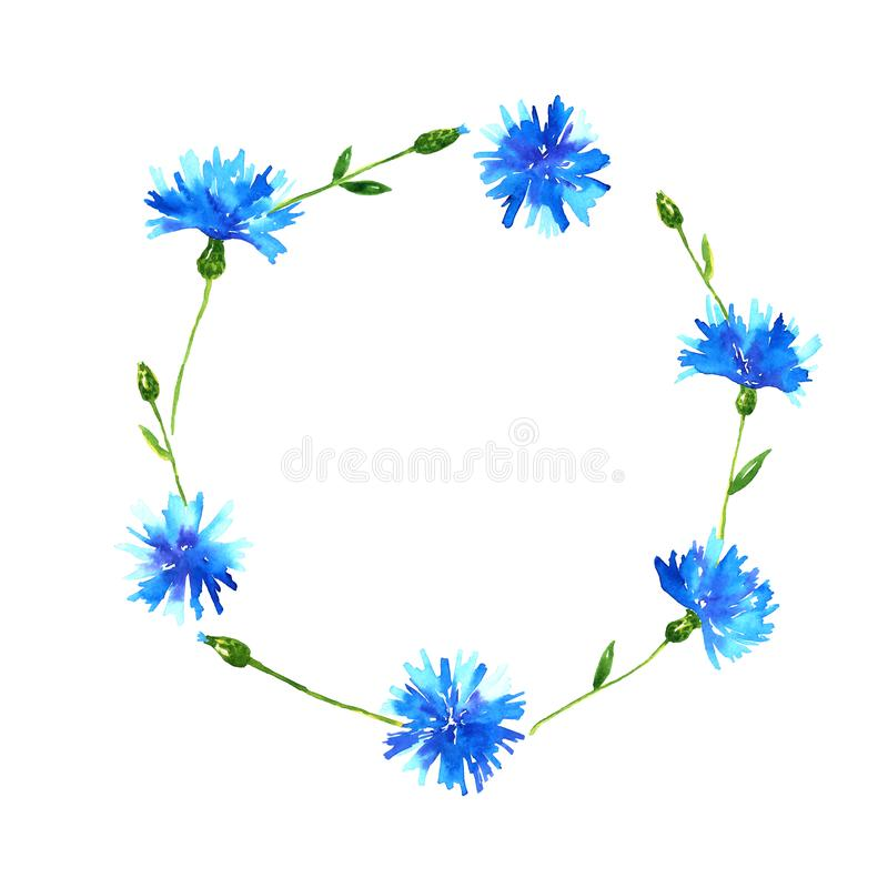 Wreath with cornflowers. Round frame with blue beautiful flowers. Hand drawn watercolor illustration. Isolated on white background royalty free illustration