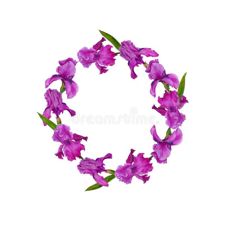 Wreath flowers irises watercolor decoration design botanical illustration textiles invitations greeting card frame spring royalty free illustration