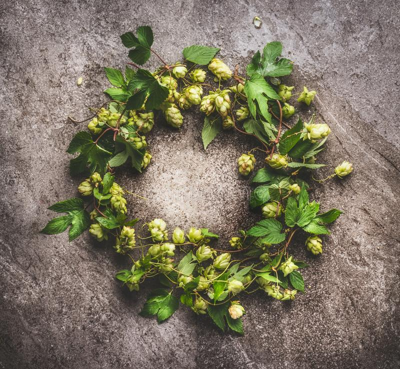 Wreath of Green hop twigs , ingredients for beer Brewing on gray background stock photography