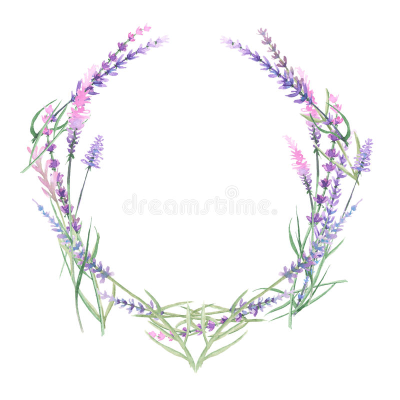 Wreath of lavender. Painted with watercolors on a white background , decoration postcard or invitation stock illustration