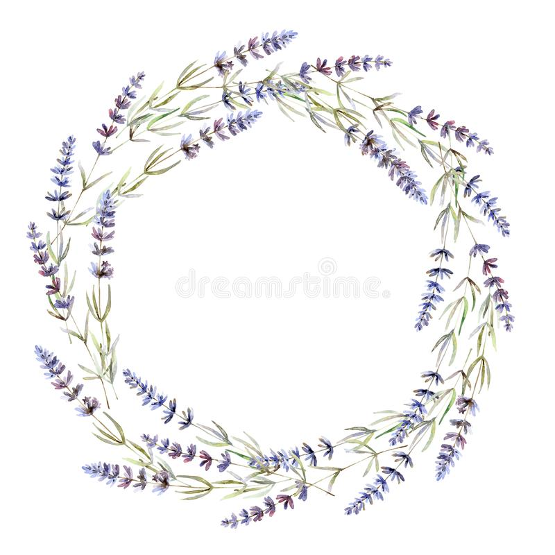 Wreath with lavender on white background. Watercolor illustration vector illustration