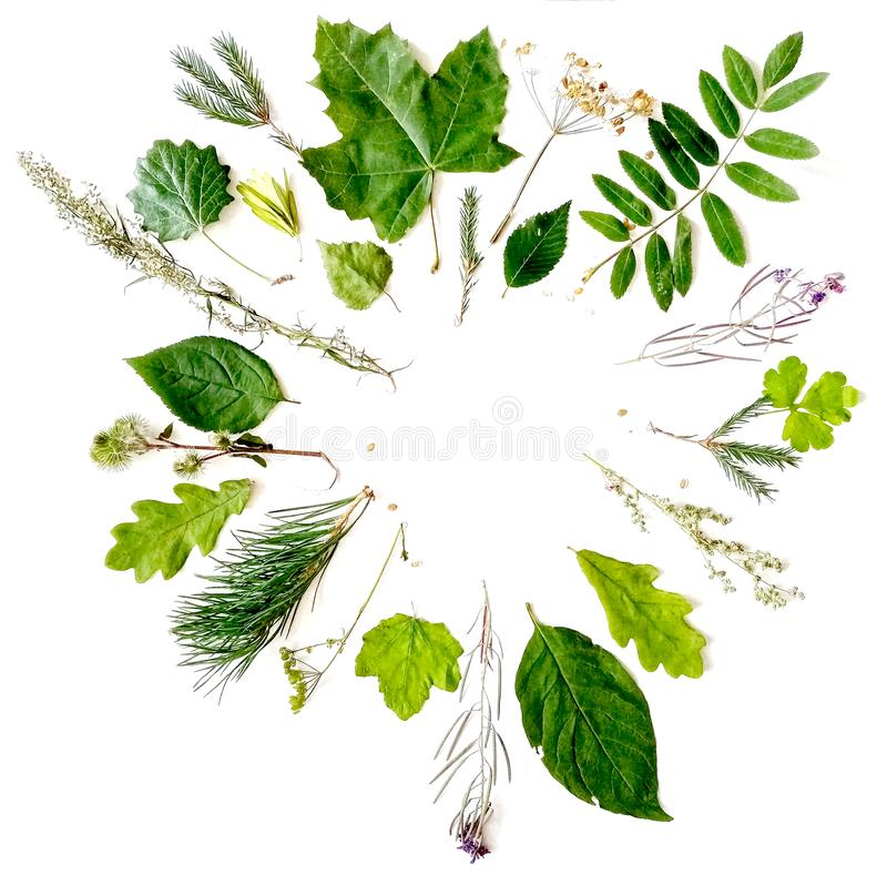A wreath of leaves and plants: maple, oak, birch, mountain ash, spruce branch and herbs. stock images