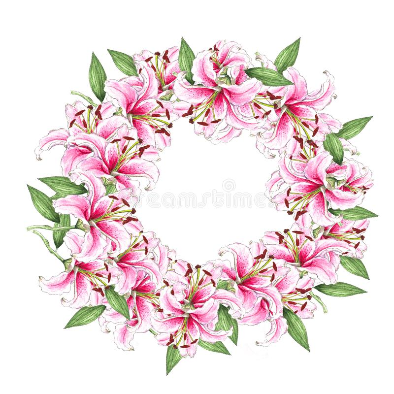 Wreath of lily flowers. Floral background. Lilies. Green leaves. Border. Flower pattern. Isolated on white background stock image