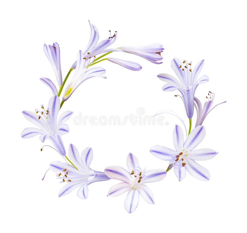 Wreath from little purple flowers isolated on white royalty free stock photos