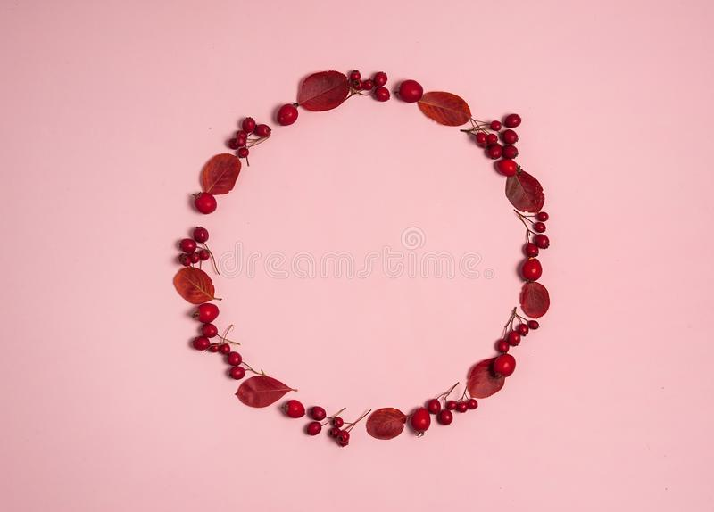 The wreath is made of red Aronia leaves and red hawthorn berries on a pink background. Autumn composition.The wreath is made of red Aronia leaves and red royalty free stock image
