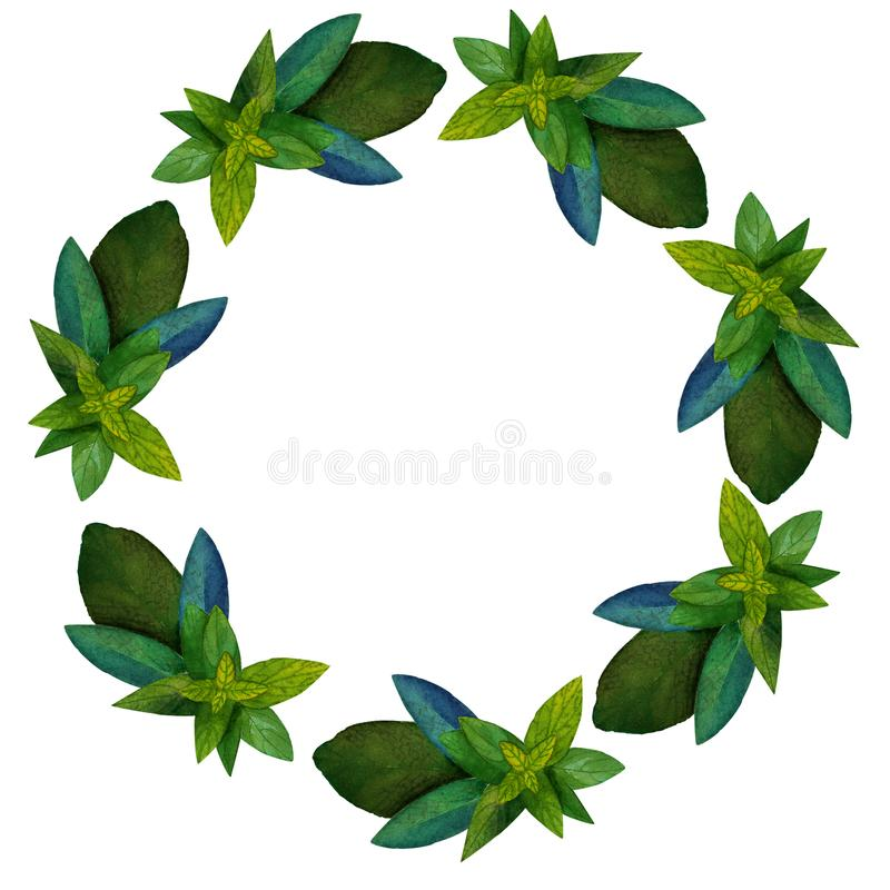 Wreath of mint and sage. Wreath of watercolor hand-drawn illustrations of mint and sage vector illustration
