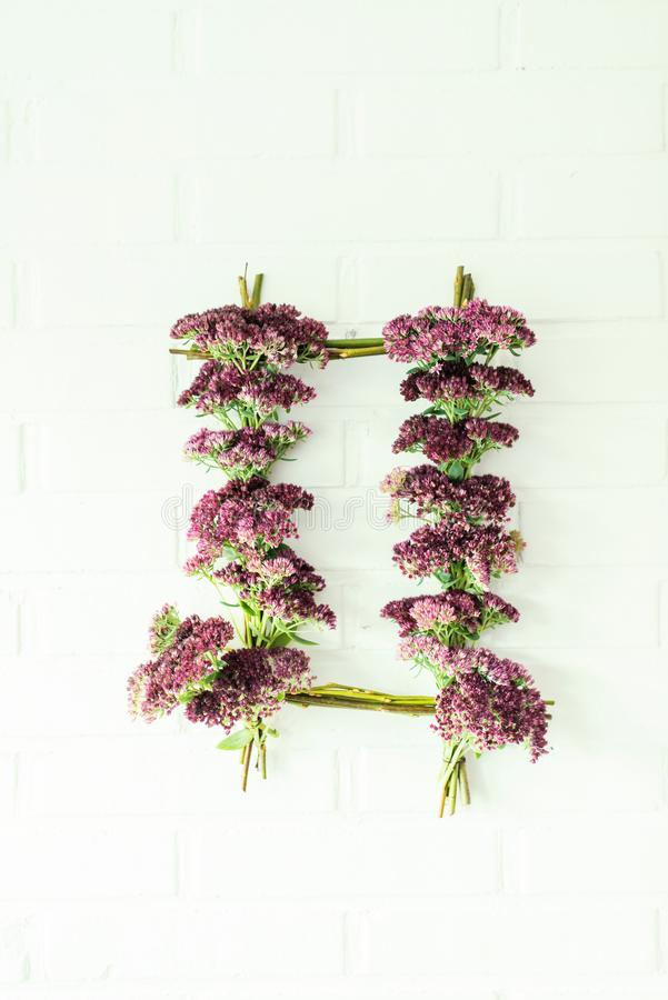Door wreath of stonecrop flowers. Wreath of pink stonecrop or Sedum Spectabile Hylotelephium flowers on white wall royalty free stock images