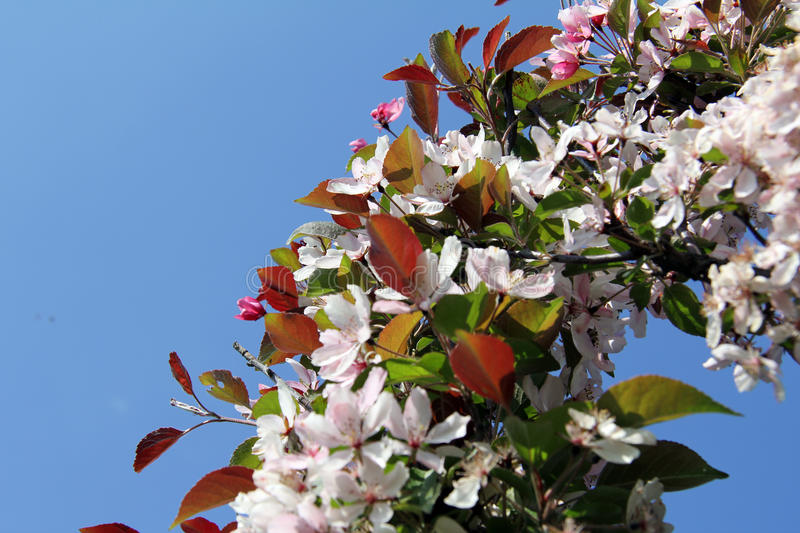 Download Wreath Rosy Delicate Flower Stock Image - Image: 28779091