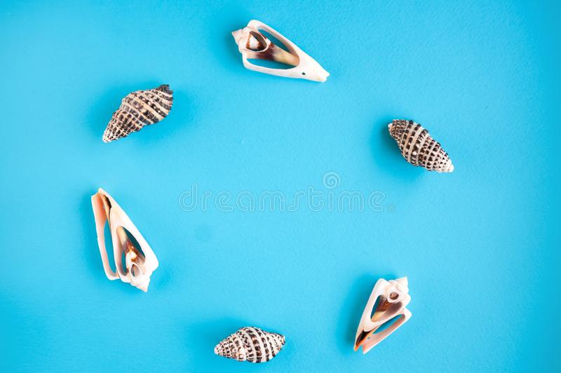 A wreath of seashells close-up. Sea shells on a blue background and copy space stock photography