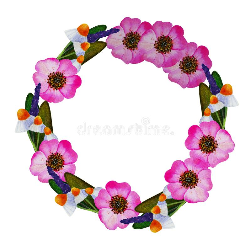 Illustration of wreath with wild rose, camomile, sage. Wreath of watercolor hand-drawn illustrations of wild rose, camomile, sage stock illustration