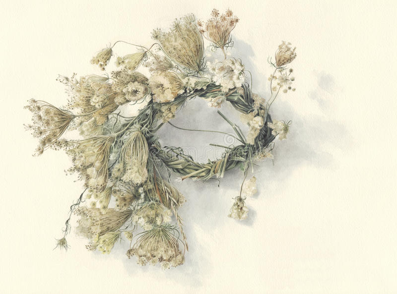 Wreath Queen Anne s Lace / Hand painted royalty free stock images