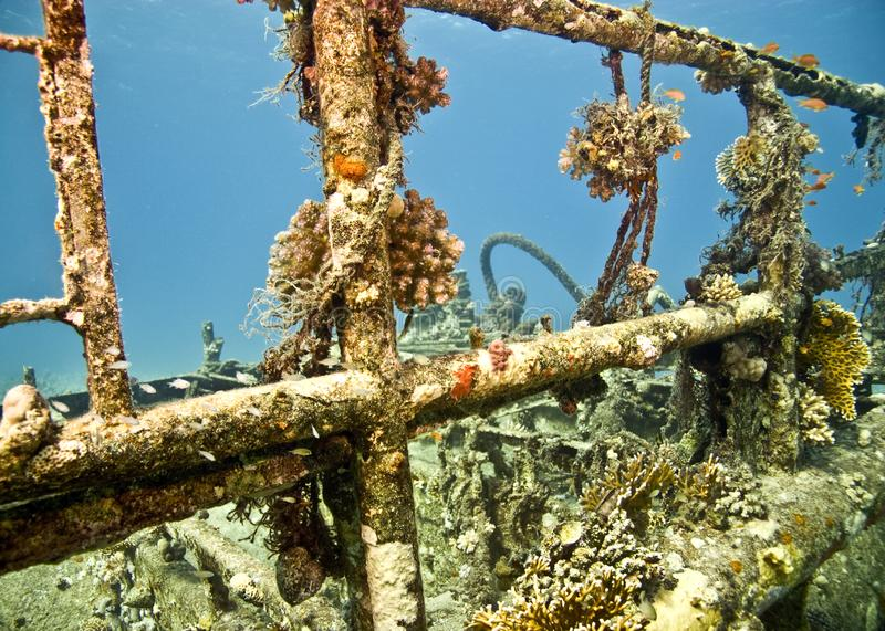 Download Wreck stock photo. Image of ocean, wreck, softcoral, wildlife - 4081786