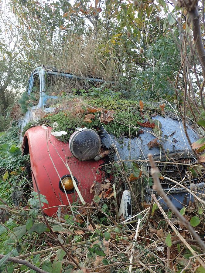Wreck of a Citroën car. A hidden wreck of a citroen car. The colours are red and blue. Covered with all kinds of plants and shrubs. Antique car dealers won`t stock photography