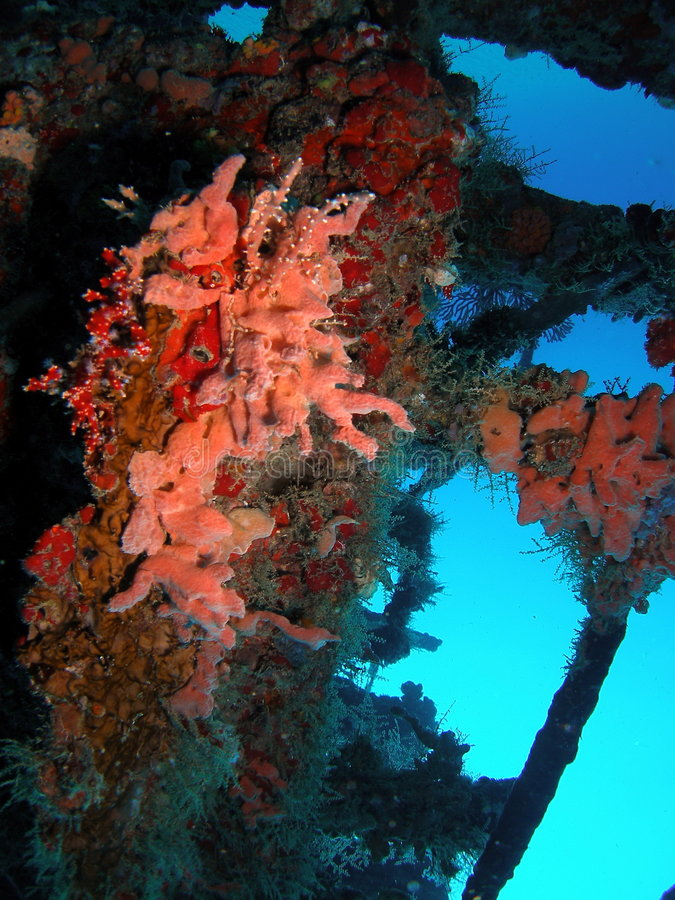 Wreck coral royalty free stock photos