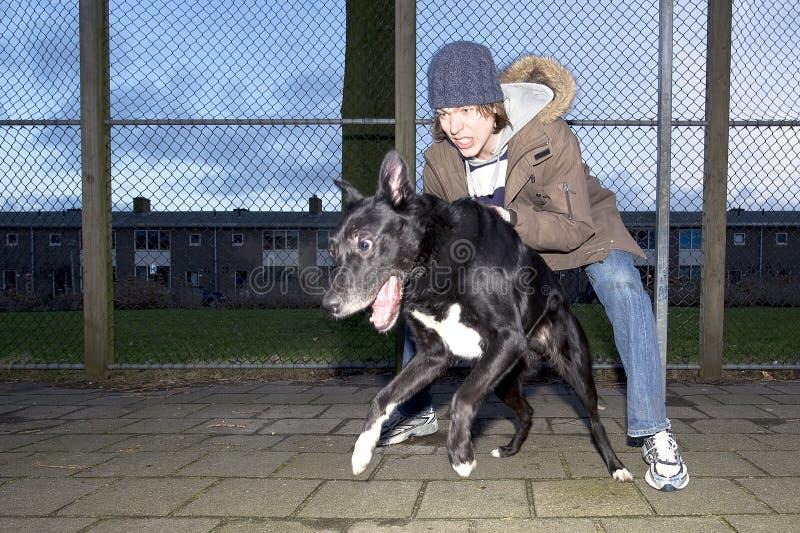 Wrede hond die vanaf zijn eigenaar springt stock fotografie