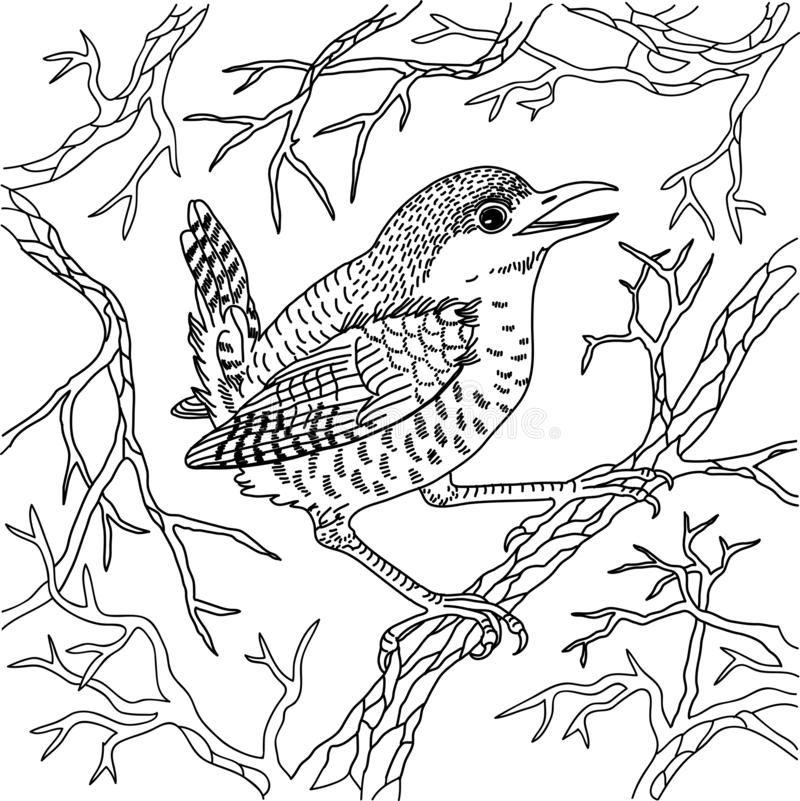 Wren on branches black and white vector illustration engraving vector illustration