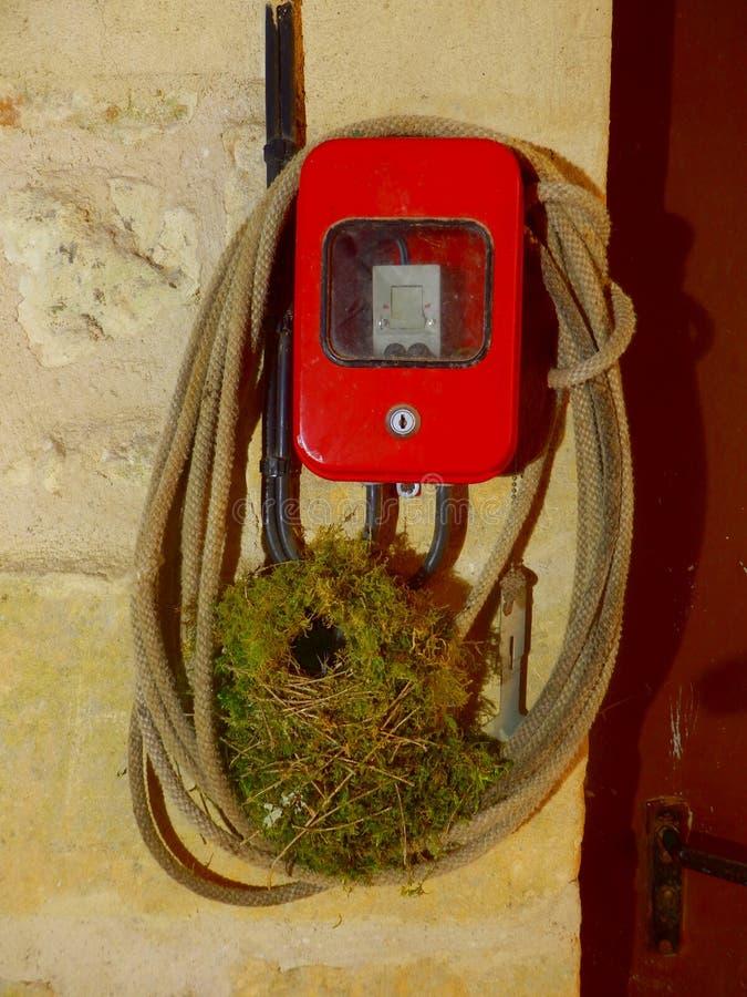 Wren Nest vuoto fotografie stock libere da diritti
