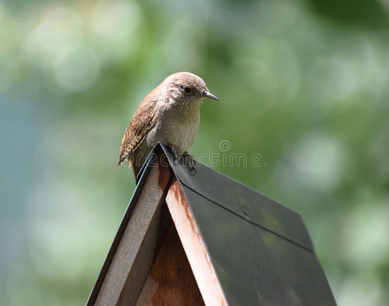 Wren Perché sur une maison d'oiseaux image libre de droits